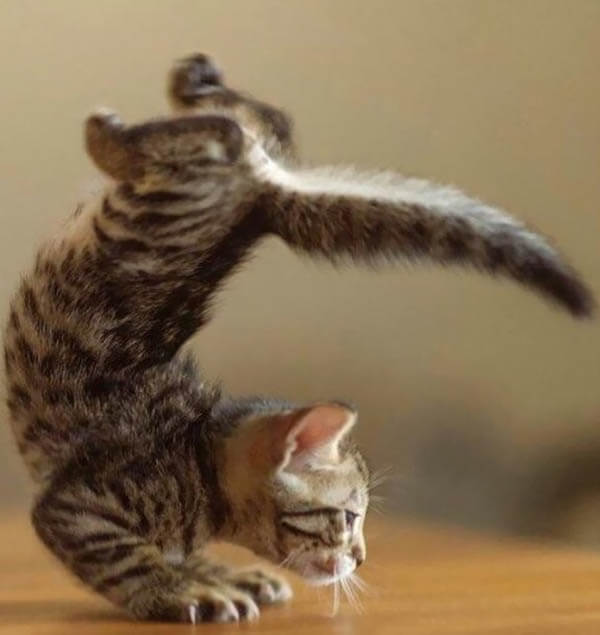 Yoga Poses Demonstrated By Adorable Animals Jal Yoga